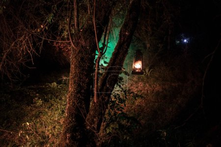 Photo for Horror Halloween concept. Burning old oil lamp in forest at night. Night scenery of a nightmare scene. Selective focus. - Royalty Free Image