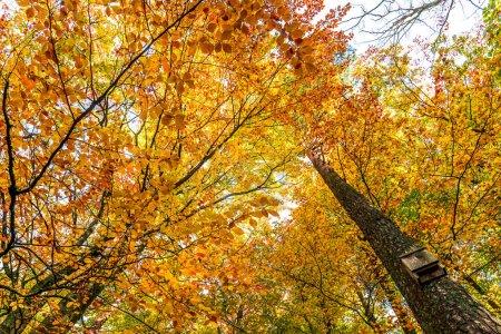 Photo pour Arbres de l'automne dorés dans la forêt, vue de dessous - image libre de droit