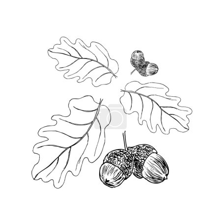 Oak branch with leaves in black ink. Art illustration. The ornament