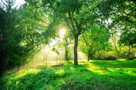 Photo for Green forest background with morning sunrise in spring season. Nature landscape. - Royalty Free Image